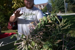 Brussels sprouts on the stalk abound at the farmers' markets.